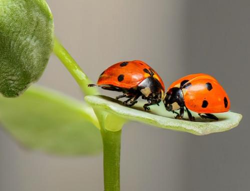 Bugs und Verbesserungen